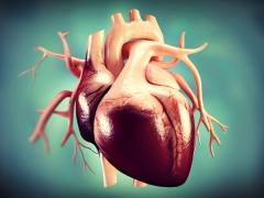 Aortic Valve Diseases