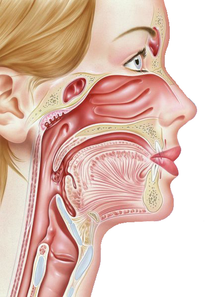Throat-diseases-1