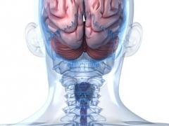 أمراض الدماغ