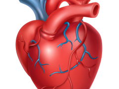 human-heart-medicine-internal-organs-3d-icon-vector-20490391