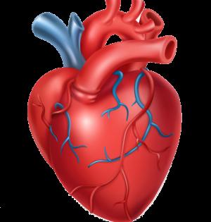 human-heart-medicine-internal-organs-3d-icon-vector-20490391